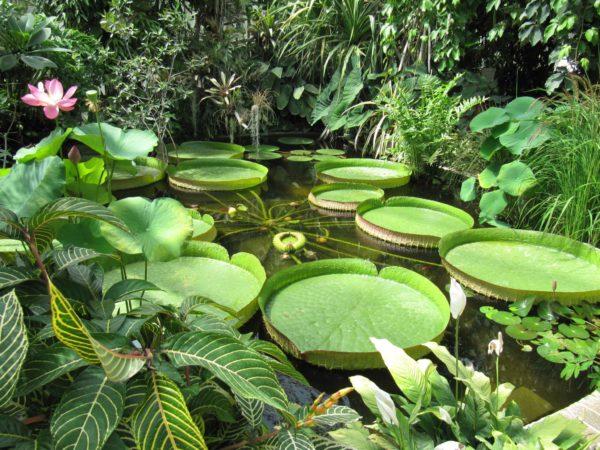 Dans les serres tropicales du Parc du Moulin à Tan de Sens